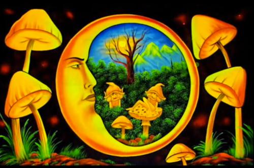 Magic Mushroom Dosage Guide! | Magic Mushrooms Shop Blog