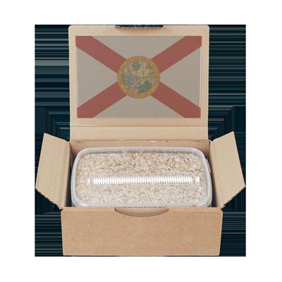 mycelium grow kit