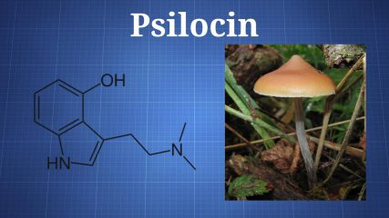 Fast Facts: Psilocin and Psilocybin