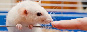 mice hallucinate