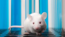 Studying mice explains: how do we hallucinate?