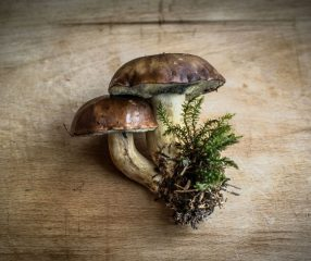 10 Fascinating Facts About Mushrooms