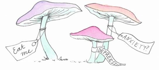 The healing power of magic mushrooms (psilocybin)