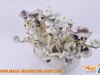 Albino A+ magic mushroom grow kit