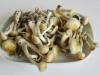 Harvest magic mushrooms