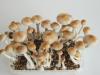 First flush of ecuadorian mushrooms