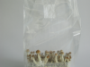 Mushrooms in grow bag