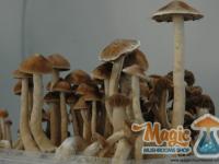 Ready to pick mushrooms