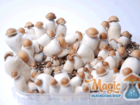 The mushroom growkit in full effect
