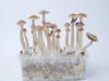 Magic Mushroom Grow kit Treasure Coast